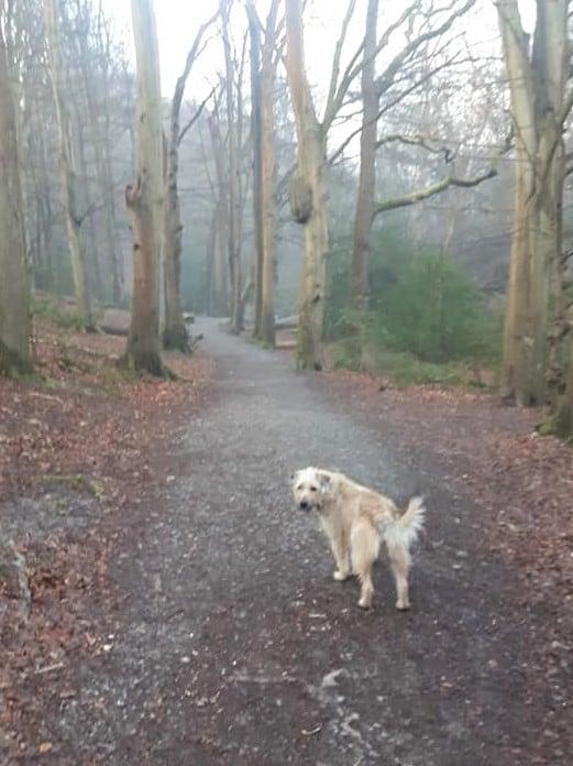 dog walking at dawn